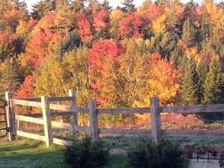 Fall on the Farm