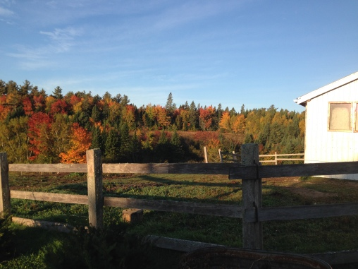 Fall on the Farm