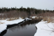 Trout brook that bisects our property