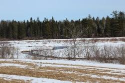 The Bouctouche River (bkgrnd) still frozen (trout brook open)